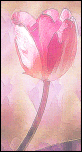 Tulip in Watercolour