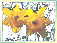 Priscilla Daffs on Watercolour